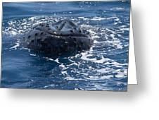 Humpback Whales Greeting Card