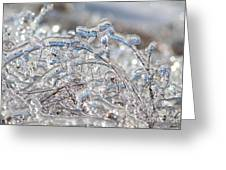 Ice Storm Alfalfa Greeting Card