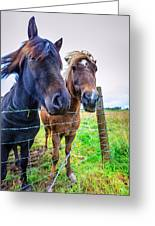 Icelandic Ponies Greeting Card