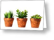 3 Indoor Plants Greeting Card