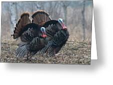 Jake Eastern Wild Turkeys Greeting Card