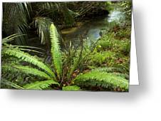Jungle Stream Greeting Card by Les Cunliffe