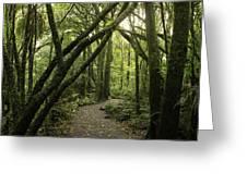 Jungle Trail Greeting Card