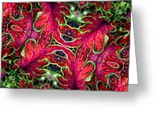 Kaleidoscope Made From An Image Of A Coleus Plant Greeting Card