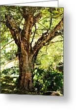 Kingdom Of The Trees. Peradeniya Botanical Garden. Sri Lanka Greeting Card