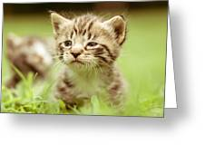 Kitty In Grass Greeting Card