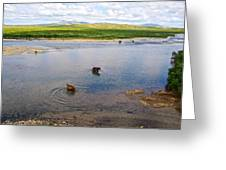 3-lay Of Land Grizzly Bears In Moraine River In Katmai National Preserve-ak Greeting Card