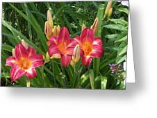 Three Lilies In A Row Greeting Card