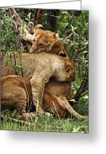 Lion Cubs On The Masai Mara  Greeting Card