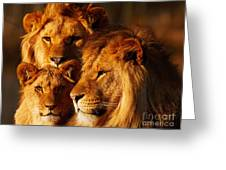 Lion Family Close Together Greeting Card