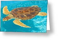 Loggerhead Sea Turtle Greeting Card