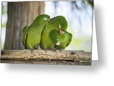 3 Love Birds -206 Greeting Card