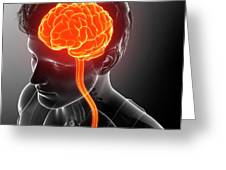Male Brain And Spinal Cord Greeting Card