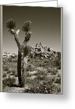 Joshua Tree National Park Landscape No 3 In Sepia Greeting Card