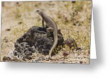 Mojave Desert Iguana Greeting Card