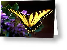 Monarch On Mountain Laurel Greeting Card