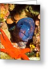 Moray Eel With Starfish Greeting Card