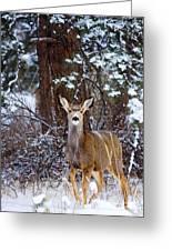 Mule Deer In Snow Greeting Card