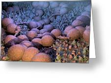 Neisseria Gonorrhoeae Bacteria Greeting Card
