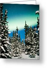 Northern Lights Aurora Borealis And Winter Forest Greeting Card