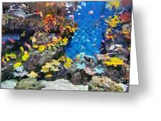 Ocean Aquarium In Shanghai Greeting Card