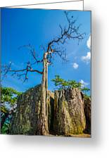 Old And Ancient Dry Tree On Top Of Mountain Greeting Card