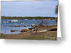 Opening Day For Snook Fishing At Sebastian Inlet In Florida Greeting Card
