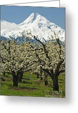 Orchard And Mount Hood, Oregon Greeting Card