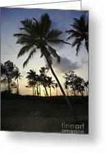 Palm Trees And Sunset Greeting Card