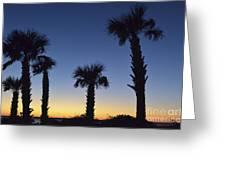 Carolina Palm Sky Greeting Card