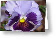Pansy From The Chalon Supreme Primed Mix Greeting Card