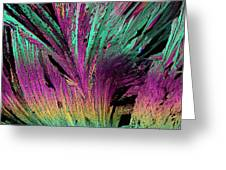 Plm Of Crystals Of Estrone Greeting Card