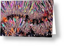 Plm Of Cystals Of Beta-estradiol Greeting Card