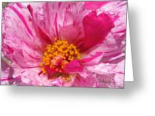 Portulaca Named Sundial Peppermint Greeting Card