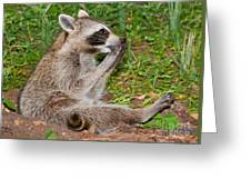 Raccoons Greeting Card