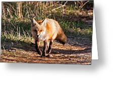 Red Fox In Prospect Park Greeting Card