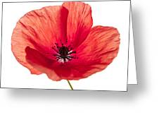Red Poppy Flower Greeting Card