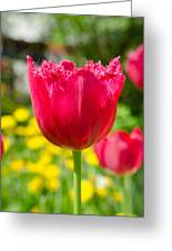 Red Tulips On The Green Background Greeting Card