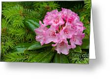Rhododendron Greeting Card