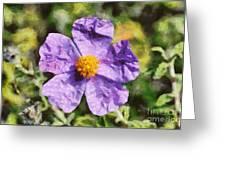Rockrose Flower Greeting Card