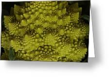 Romanesco - Italian Broccoli Greeting Card