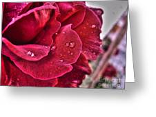 Red Rose And Summer Rain Greeting Card