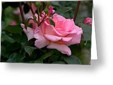 Rose Of Summer Greeting Card