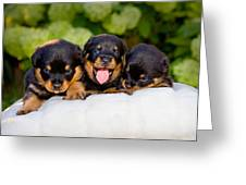 3 Rottweiler Puppies Greeting Card