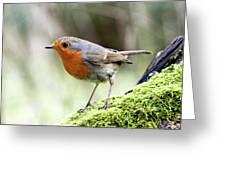 Rouge Gorge Erithacus Rubecula Greeting Card