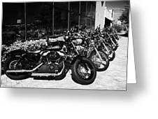 Row Of Harley Davidson Motorbikes Including Sportster Outside Motorcycle Dealership Orlando Florida  Greeting Card
