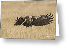 Ruppells Vulture Greeting Card