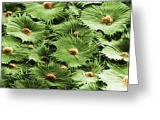 Russian Silverberry Leaf Sem Greeting Card
