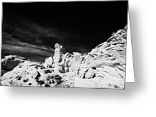 Sandstone Rock Formations At Valley Of Fire State Park Nevada Usa Greeting Card