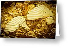 Seashell In Stone Greeting Card by Raimond Klavins